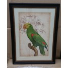 Parrot in Classic Frame