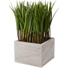 Decorative Grass in Planter