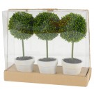 Miniature Topiary Gift Box Set of 3