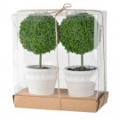 Miniature Topiary Gift Box Set of 2