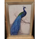 Peacock in Silver coloured frame