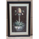 Long Pineapple in Classic Frame
