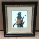 Small Enville Pineapple Print in Classic Frame