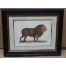 Safari Lion in small ebony coloured frame